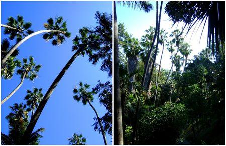 Palmtreecollage
