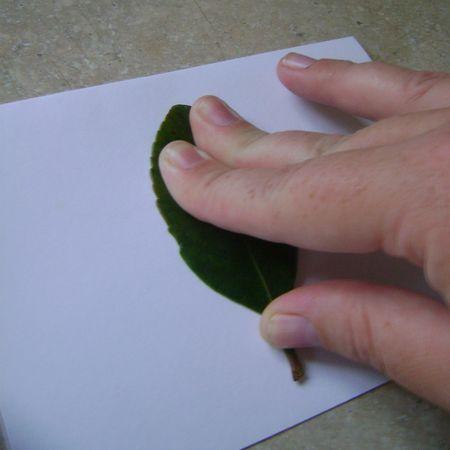 Leaf print 3