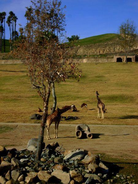 Safari park 7
